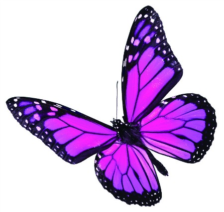 butterfly pink copy