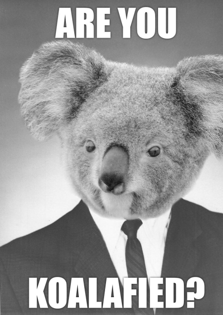 funny-koala-bear-suit-boss-koalafied-pics