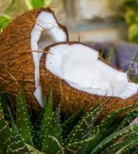 Njegova Visost – kokosovo ulje